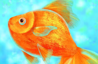золотая рыбка по фен шуй